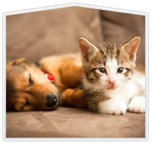 Kitten and Puppy Packages